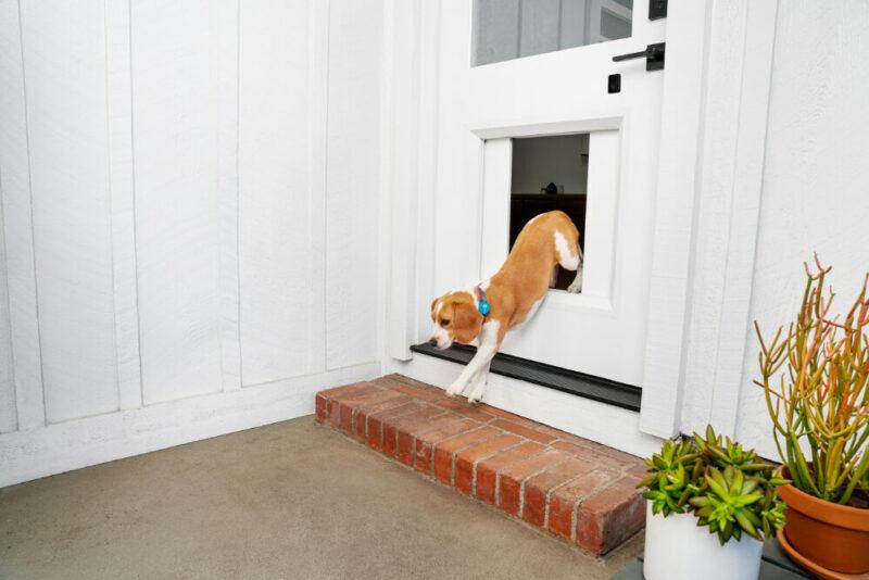 myq pet portal slim hondenluik met sensor (1)
