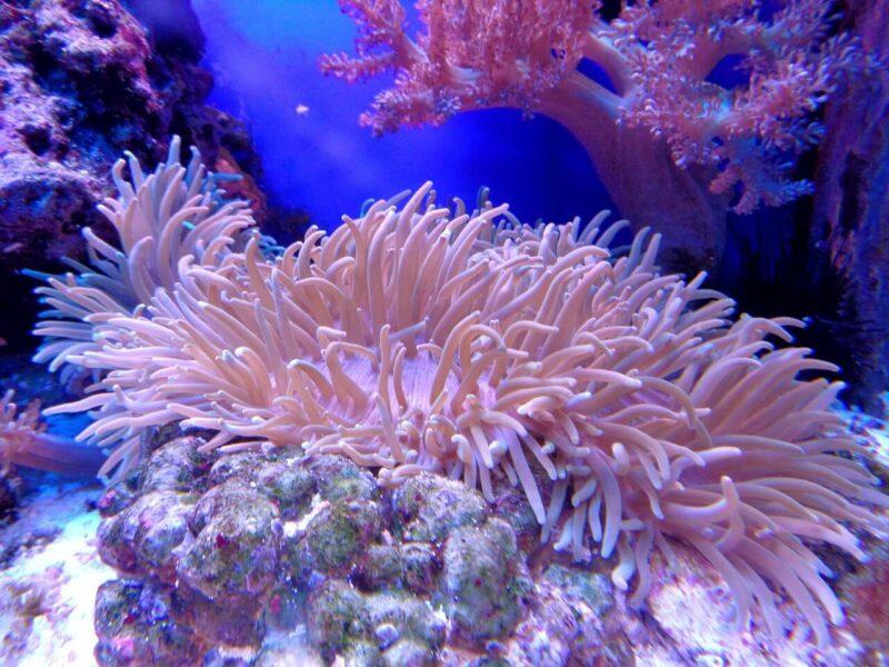 robotkwallen bedreigd koraalrif